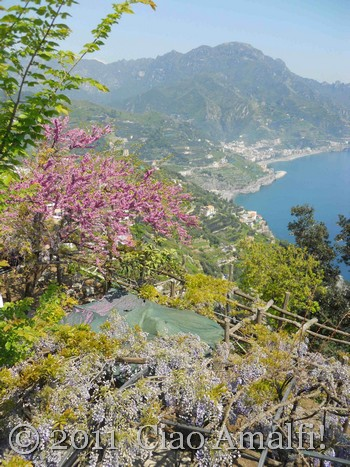 Spring Blooms in Ravello