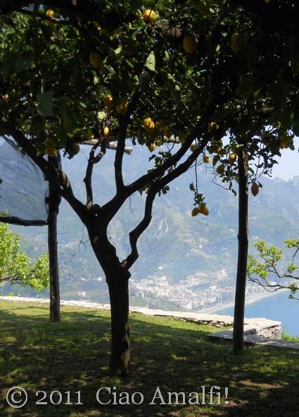 Lemon Grove in Ravello