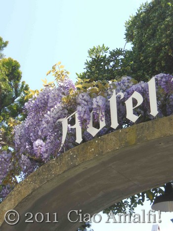 Wisteria at the Hotel Rufolo in Ravello