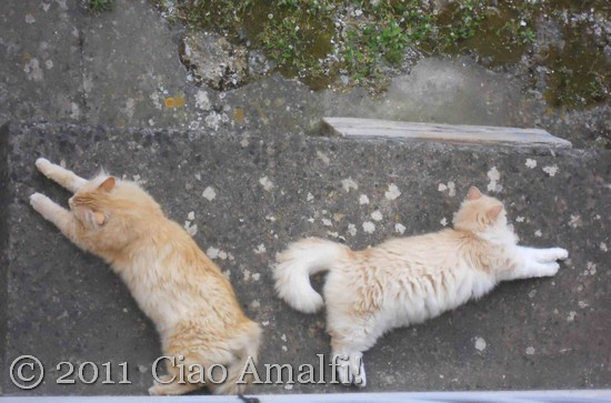Garden Cats on the Amalfi Coast