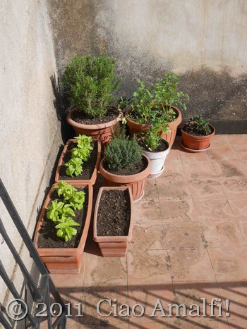 Herbs on the Terrace