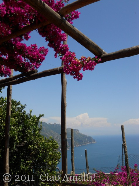 Bougainvillea on the Amalfi Coast