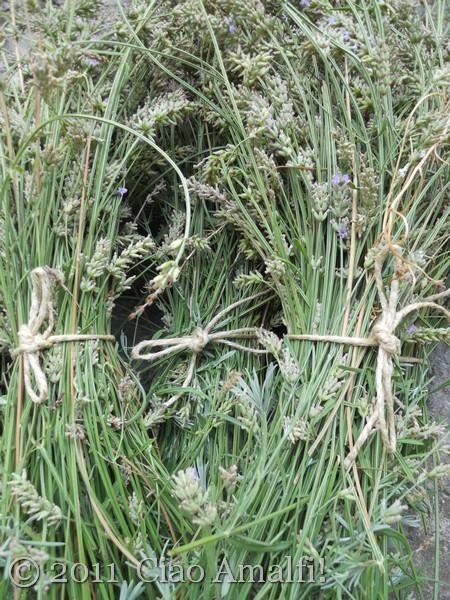 Lavender Harvest 2011