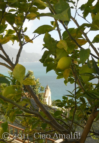 Winter Lemons on the Amalfi Coast