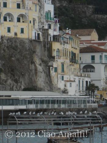 Seagulls in Amalfi