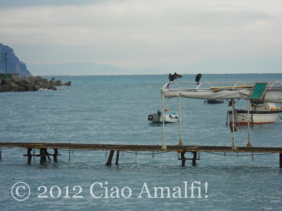 Bird Watching on the Amalfi Coast
