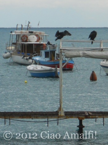 Cormorants in Amalfi