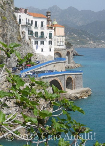 Figs Growing on the Amalfi Coast in Atrani