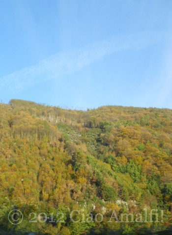 Fall Leaves on the Amalfi Coast