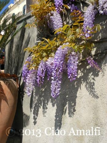 Ciao Amalfi Coast Blog Positano Wisteria