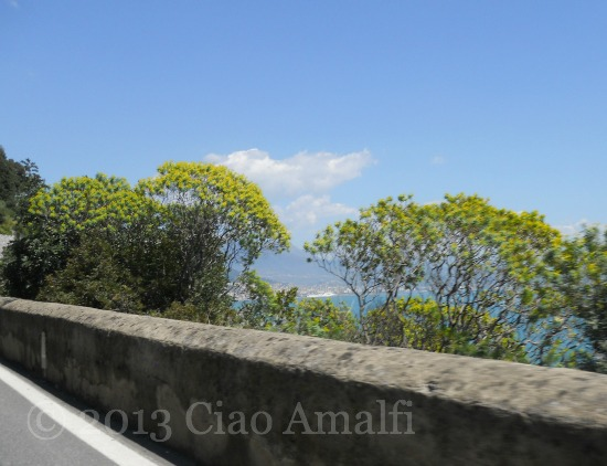 Ciao Amalfi Coast Travel Broom Bushes