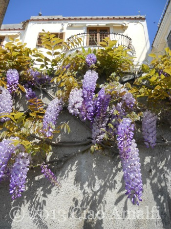 Ciao Amalfi Coast Travel Positano Wisteria Boughs