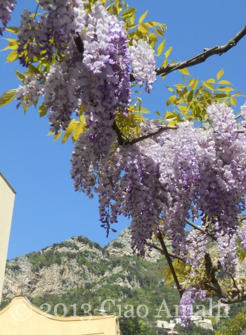 Ciao Amalfi Coast Travel Positano Wisteria Brilliant Blue Sky