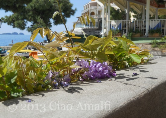 Ciao Amalfi Coast Travel Positano Wisteria Li Galli Islands
