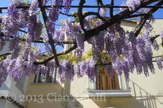 Ciao Amalfi Coast Travel Positano Wisteria Pergola