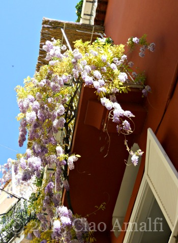 Ciao Amalfi Coast Travel Positano Wisteria Red Walls