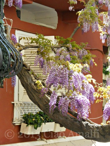 Ciao Amalfi Coast Travel Positano Wisteria Vines