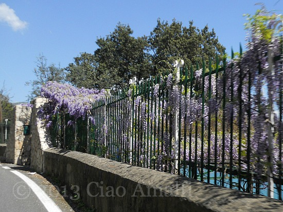 Ciao Amalfi Coast Travel Wisteria Drive