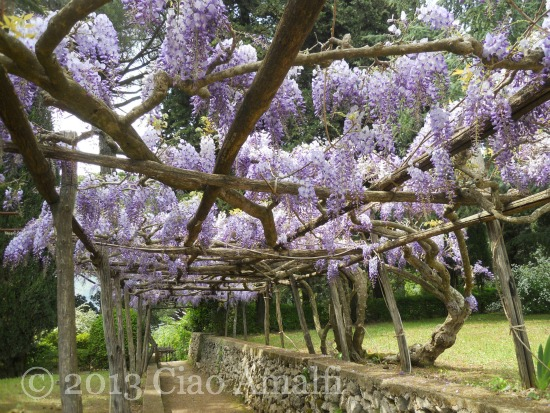 Ciao Amalfi Coast Travel Ravello Villa Cimbrone Wisteria Walkway