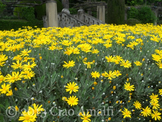 Ciao Amalfi Coast Travel Ravello Villa Cimbrone Yellow Flowers