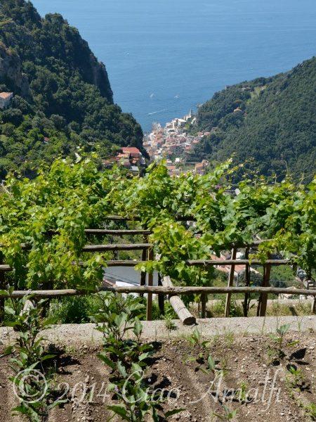 Amalfi Coast Travel Garden Terrace