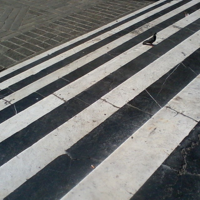 Even the steps had stripes in Genoa! I have a soft spot in my heart for buildings with stripes. #genova #italy #architecture #naturalb&w #pigeon