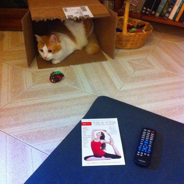 Getting ready for yoga with an audience. #stralaeverywhere #stralawithcats