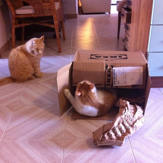 Box envy. #cats #ikea