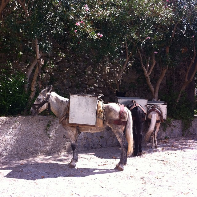 Break time! Mules and donkeys are still very much used for transporting materials up and down the steps of the #AmalfiCoast. Hard work!!