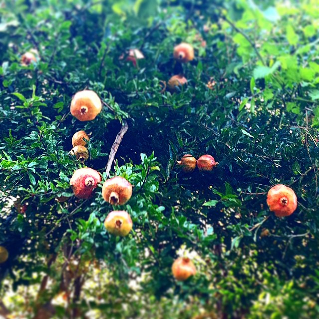 Oooh...it's almost pomegranate time! #AmalfiCoast
