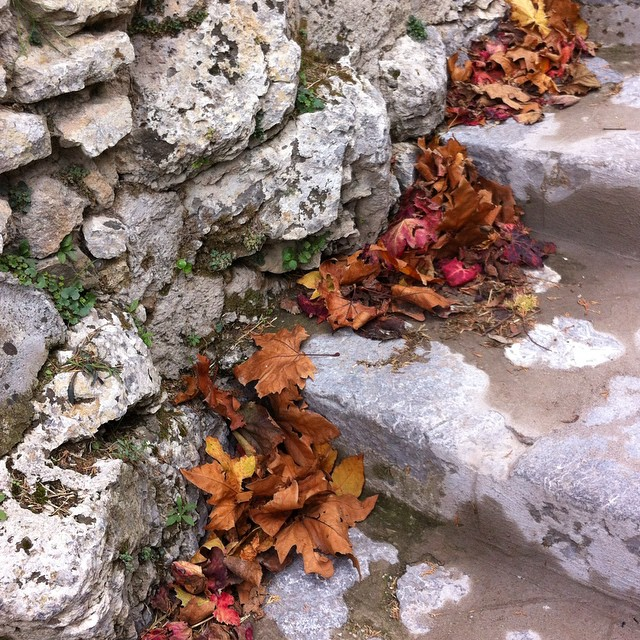 I thought that the crazy intense wild windstorm last night that kept us up for hours would have blown all the #autumn leaves at least to the other coast of #Italy or beyond. But I'm happy to see some of them stuck around! #autunno