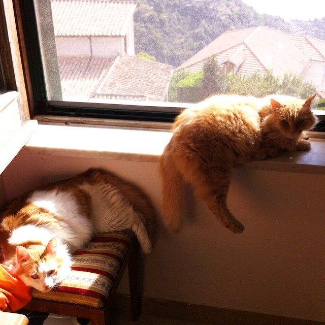 Toulouse and Puffy decided the sun by the window was nice this morning, too. #copycats #catsofinstagram