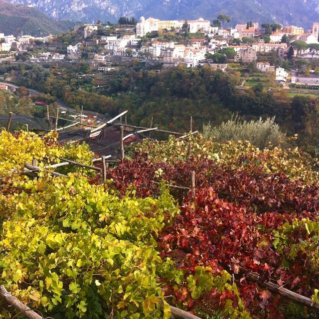 Autumn grape vines looking toward #Ravello. #AmalfiCoast #autumn #autunno #browsingitaly