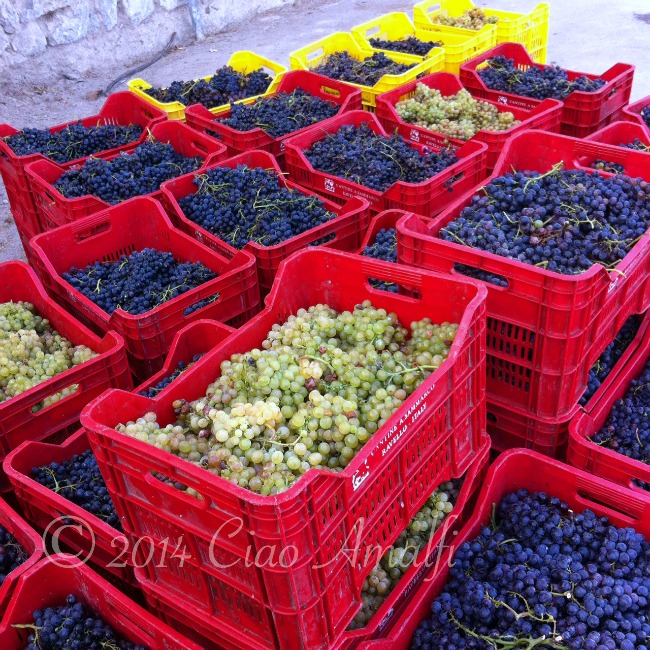 Amalfi Coast Travel Autumn Wine Harvest