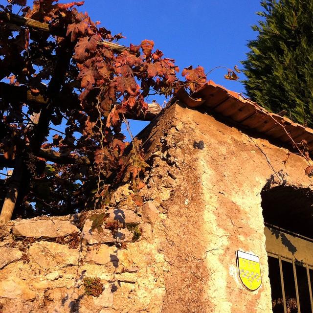 Morning glow on deep red grape vines. #autumn #autunno #AmalfiCoast #Scala