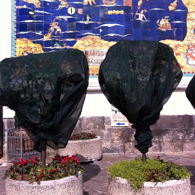 The lemon trees are under wrap in Amalfi. Hang on little trees ... spring is coming! #amalfi #amalficoast #inverno #winterinamalfi