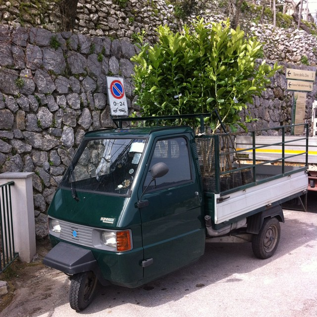 Lemon tree delivery on the Amalfi Coast. (Wish they were mine!) #thisisitaly #browsingitaly #amalficoast