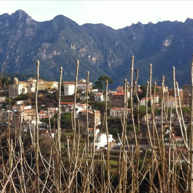 Those look like buds to me. Spring is coming! #ravello #amalficoast