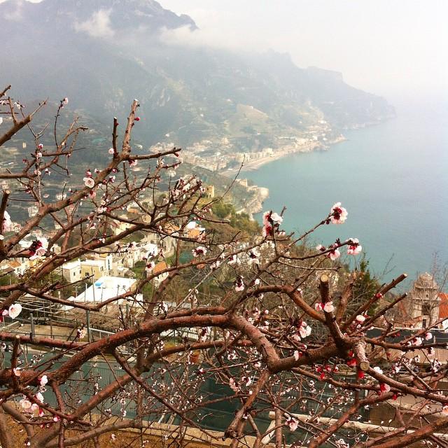 Spring blossoms! #ravello #amalficoast #spring #primavera