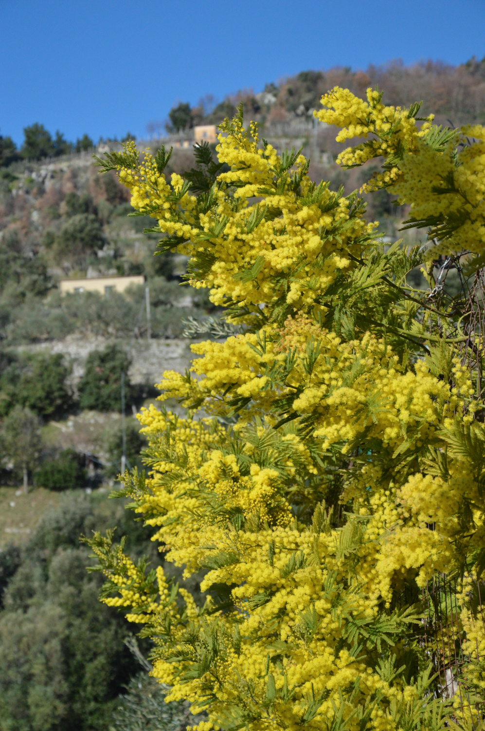 Amalfi Coast Travel Spring Mimosa-2