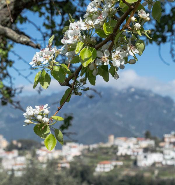 Amalfi Coast Travel May-2