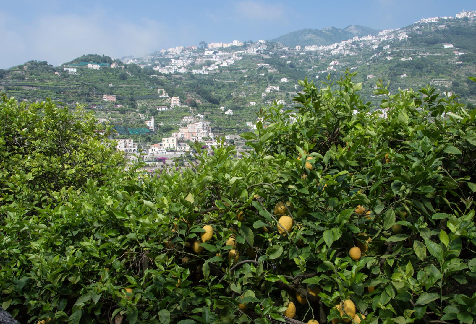 ciao-amalfi-lemons-3