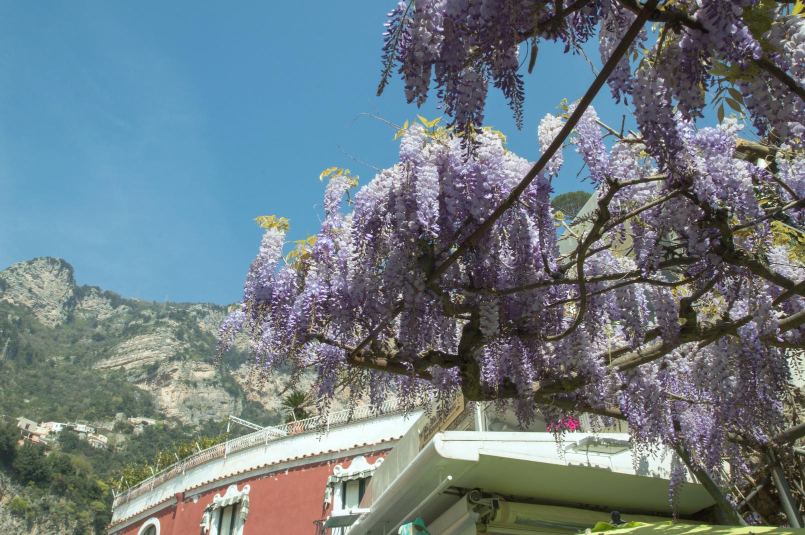 ciao-amalfi-positano-wisteria-3