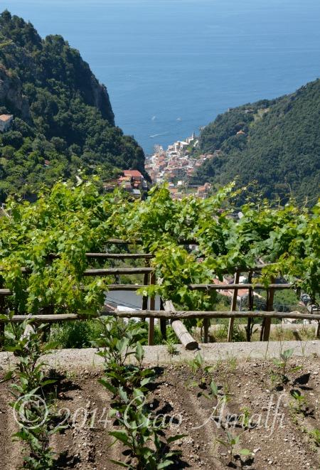 Foto Friday   Amalfi Coast Garden