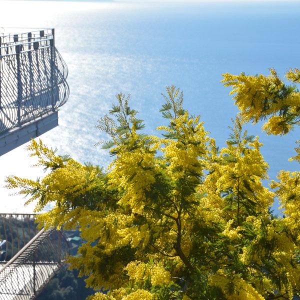 Amalfi Coast Travel Spring Mimosa-4