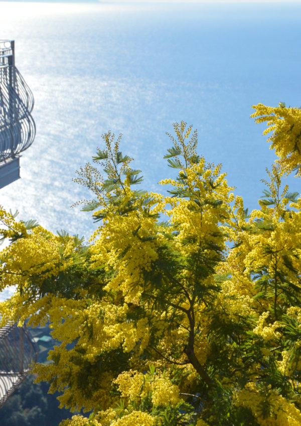 A Straight Shot of Spring on the Amalfi Coast