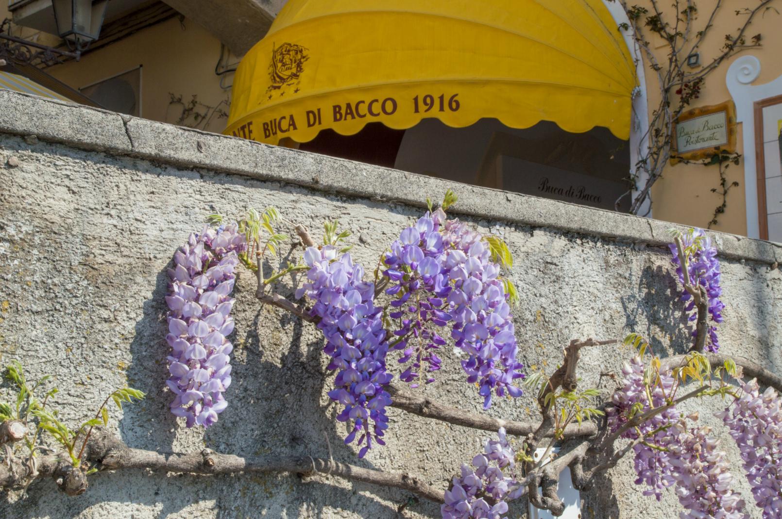 ciao-amalfi-positano-wisteria-1